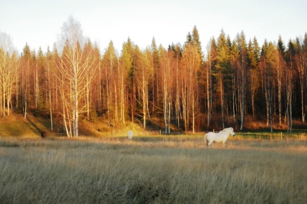 Horses in the autumn light