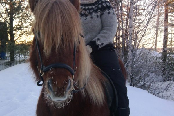 Winter ride Horses of Taiga