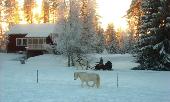 Horse sleigh at Horses of Taiga