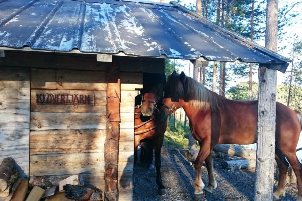 Horses break Klövertjärn