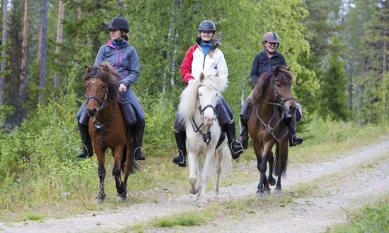 Horse adventure in Swedish Lapland