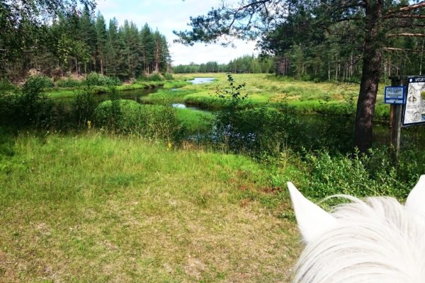 Svansele natural reserve from horseback