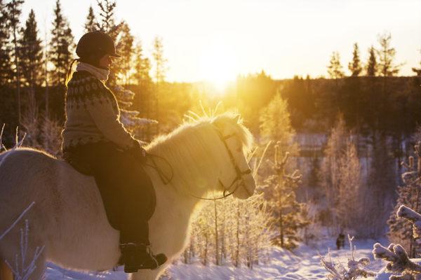Swedish Lapland on horseback
