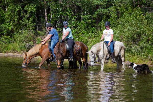 Water break for the horses